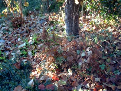 Gartenarbeit im november der gartenratgeber - Gartenarbeit im januar ...