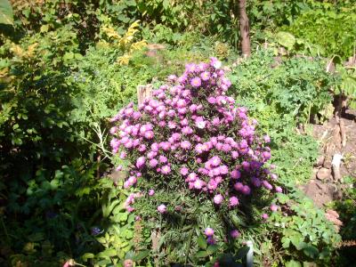 Immer Blühender Garten staudenbeet im garten gartenbob de der gartenratgeber