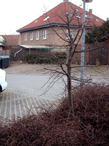 Gemeinsame PKW-Stellplatz » GartenBob.de der Garten Ratgeber &JV_95