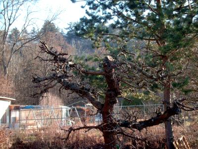 Apfelbaum Sch 228 Dlinge Und Krankheiten 187 Gartenbob De Der