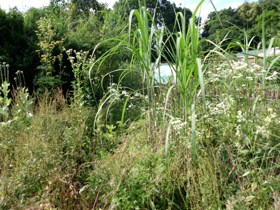 Naturnahe Gartenecken