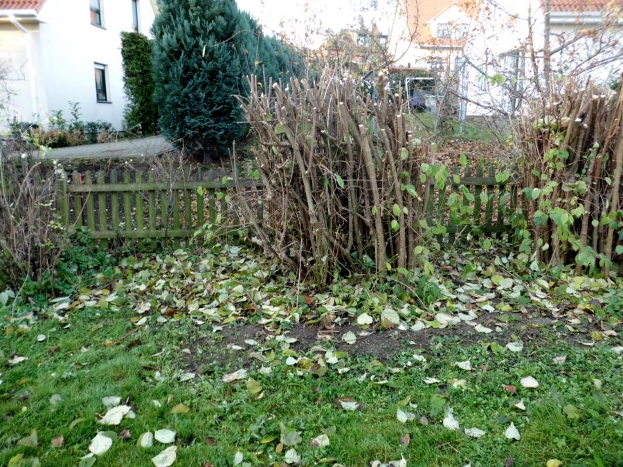 Extrem Sträucher schneiden » GartenBob.de der Garten Ratgeber SH57