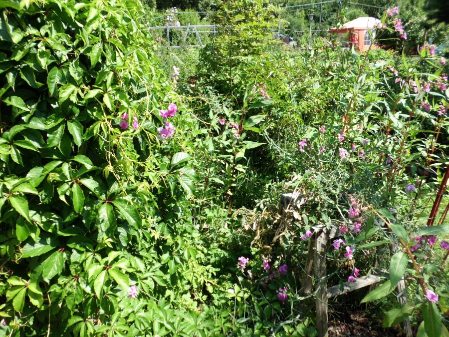 Initiative 2x2 im Garten