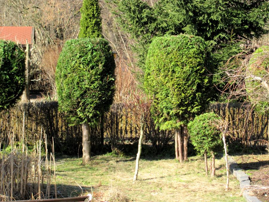 Auch Pflanzen können als Sichtschutz dienen.