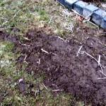 Hexenringe im Rasen