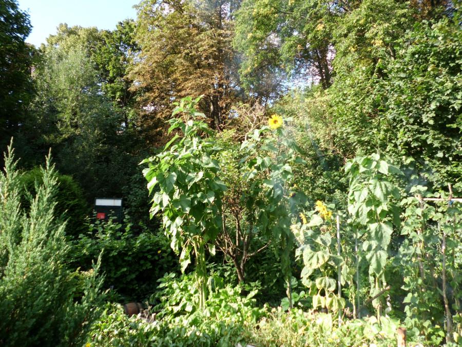 Gemütlicher Garten