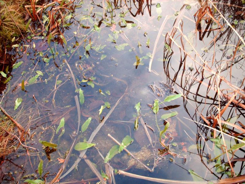 Biotop Teich