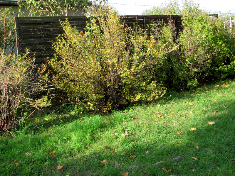Sichtschutzzaun Garten