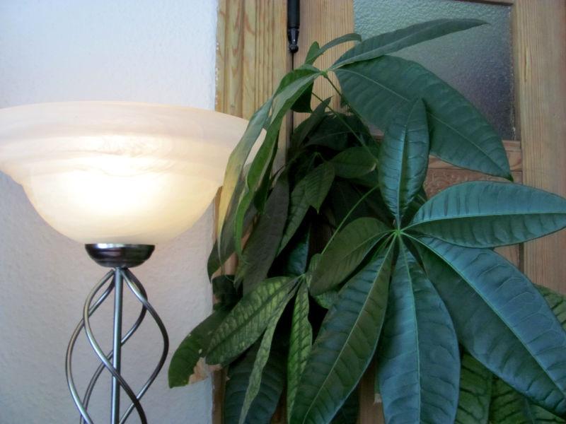 Zimmerpflanze Lampe