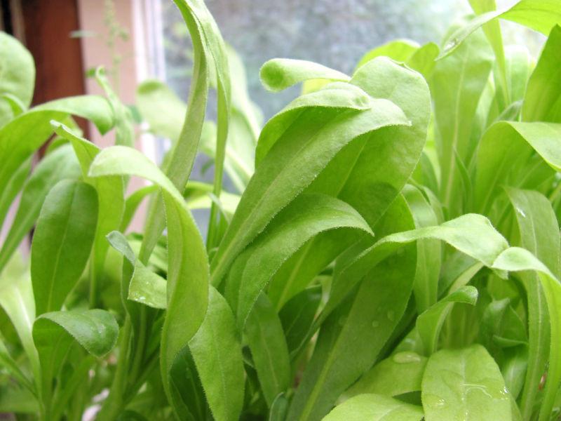 Die Vorteile Eines Wintergarten Gartenbob De Der Garten