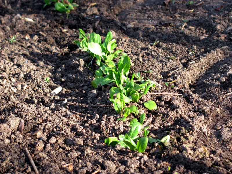 Wintergarten Pflanzen Anzucht