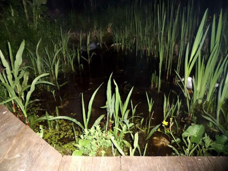 Der Garten in der Nacht