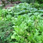 Bedeckter Gartenboden