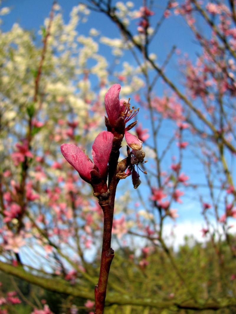 Blüte Garten Frühling