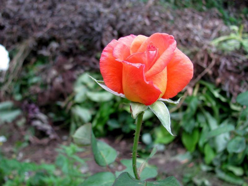 Garten am frühen Morgen