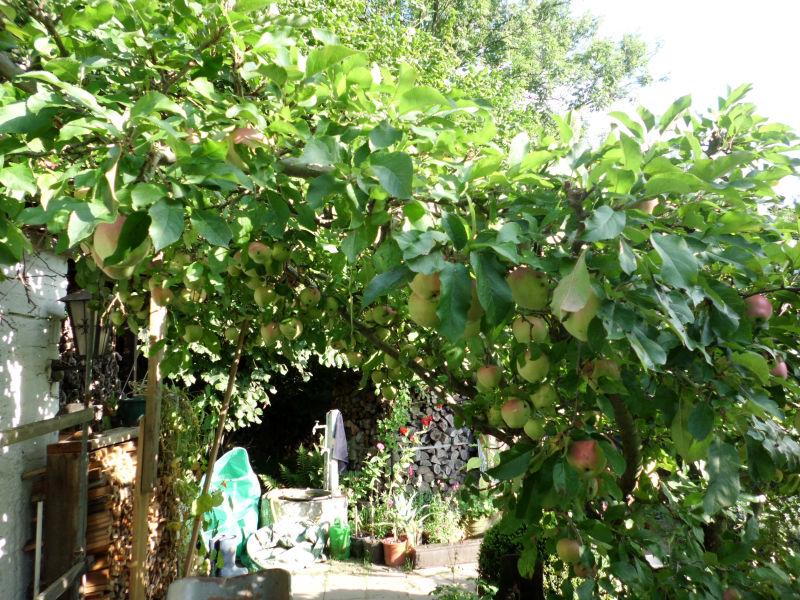 Apfelbaum kleine grüne Raupen
