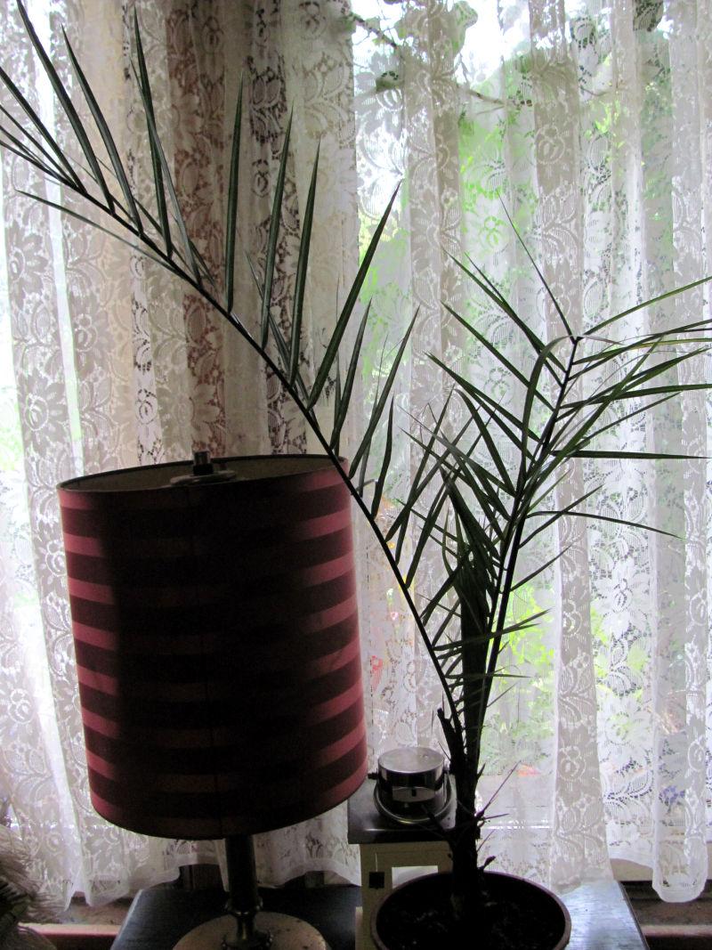 Zimmerpflanzen einfach pflegen