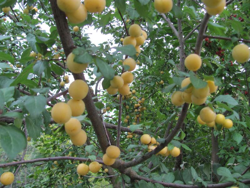 Ameisenkolonie bevölkert Baum