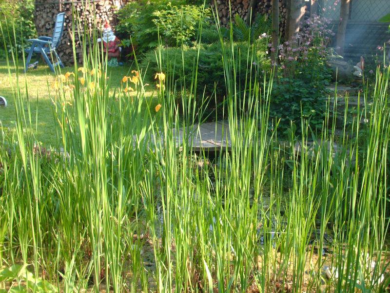 Bambus als grüner Sichtschutz
