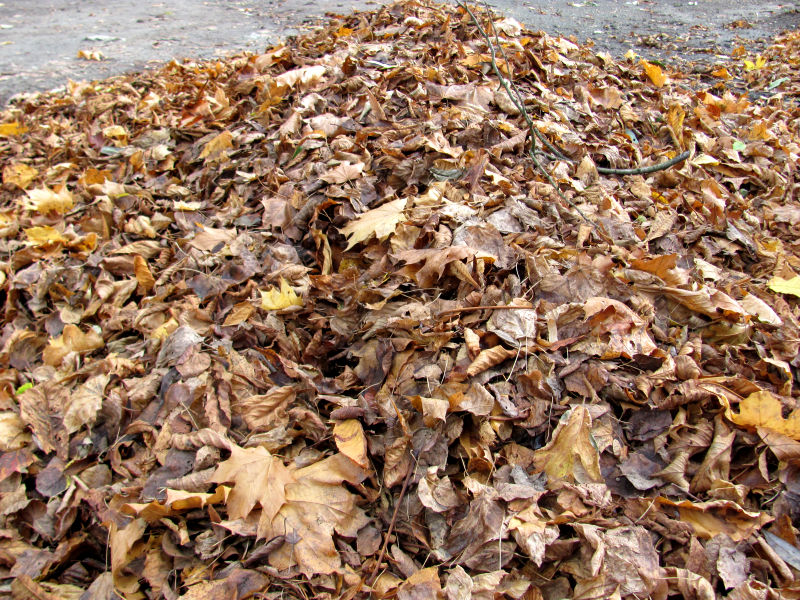 Kompost Laub