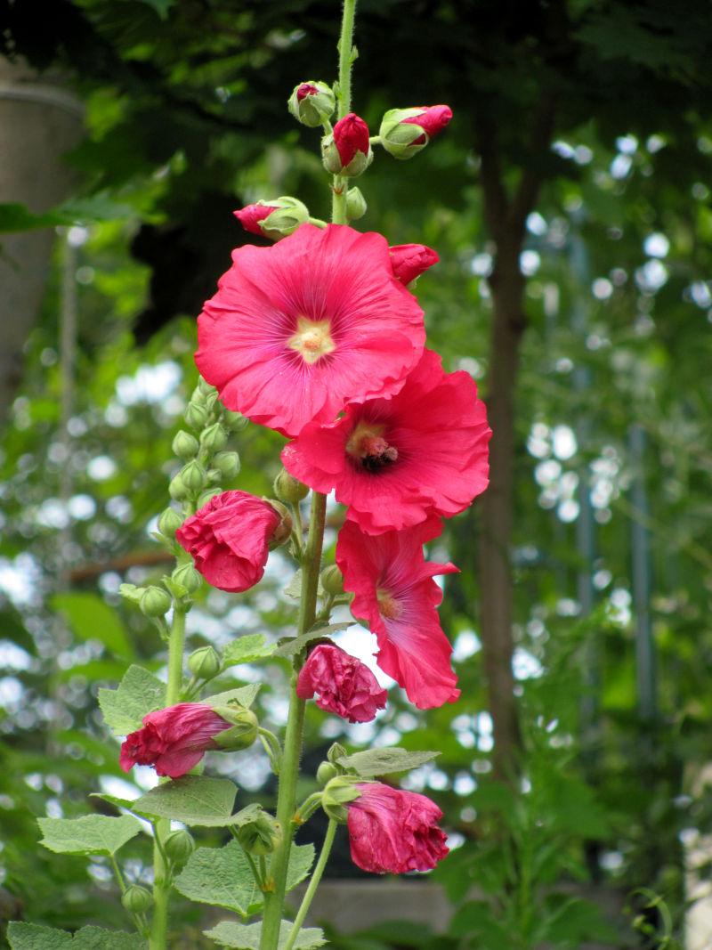 Blumen im garten  Pflanzenkübel im Garten bieten viel Potential » GartenBob.de der ...
