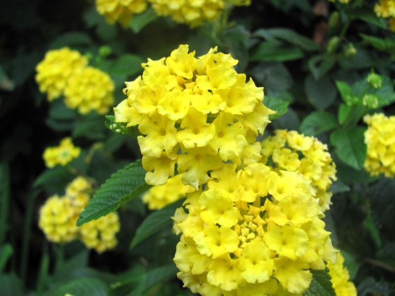 Gelbe Blumen Garten