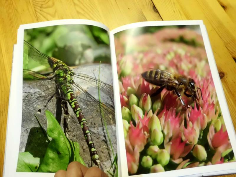 Foto Buch Bilder