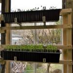 Blumenkästen einfach ins Fenster gehängt 1