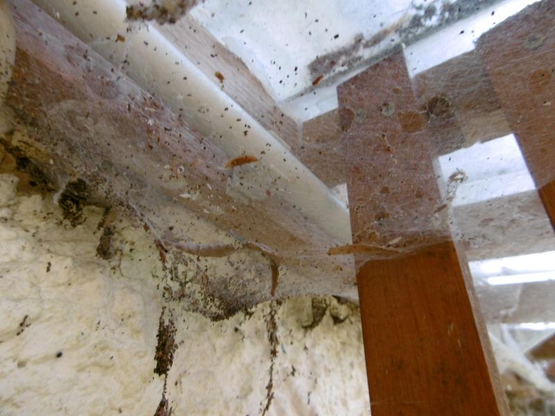 Spinnen Gewächshaus