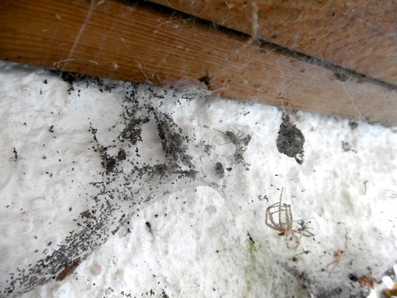 Spinnen zur Schädlingsbekämpfung