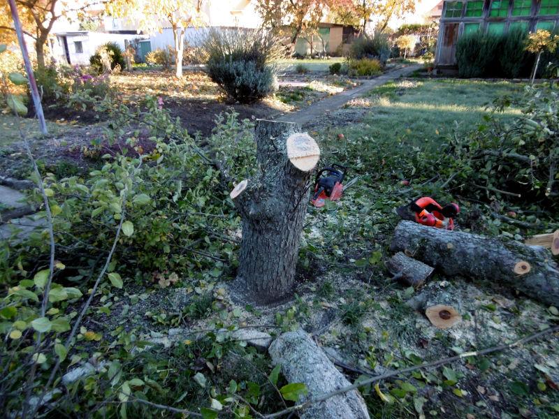 wie-faellt-man-einen-obstbaum-2