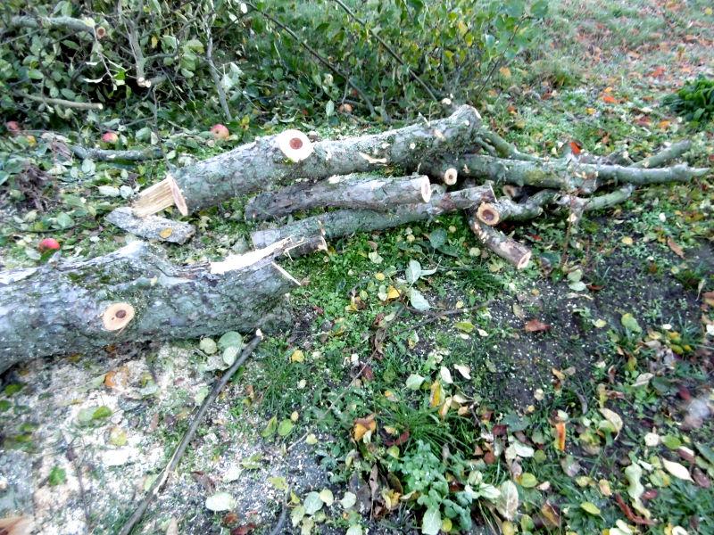 wie-faellt-man-einen-obstbaum-3