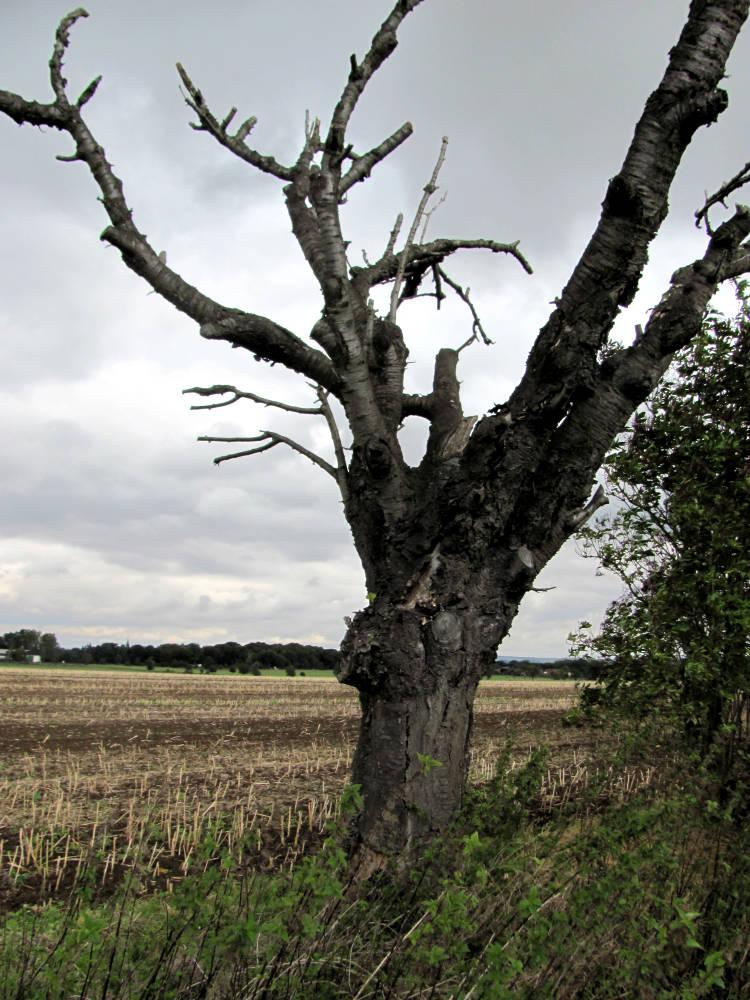Baum retten