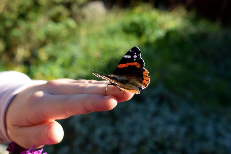 Schmetterling fliegen lassen