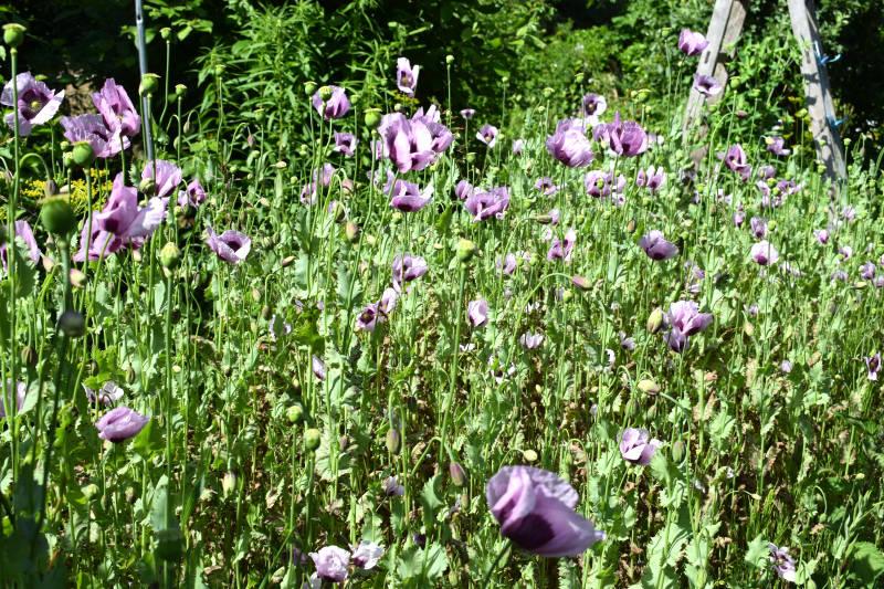 Blumenwiese Anlegen blumenwiese einfach anlegen gartenbob de der gartenratgeber