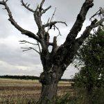 Blitzschäden am Baum und ihre Folgen