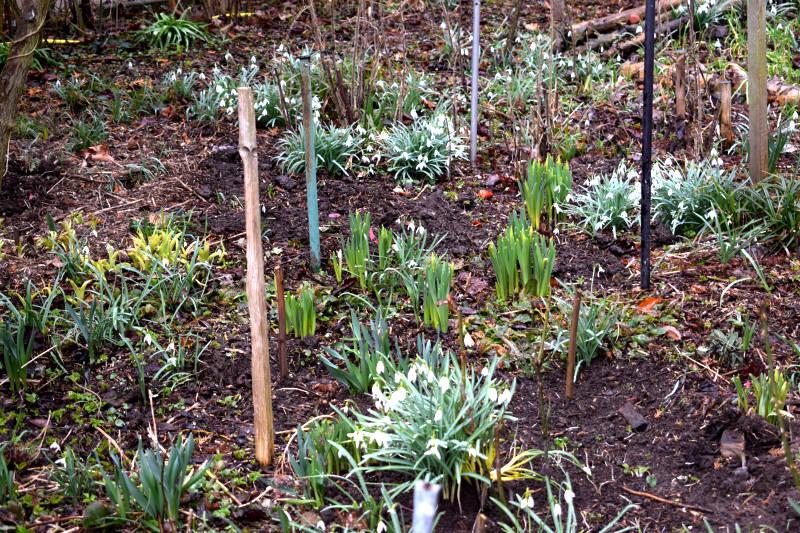 Garten mit seinen verschiedenen Bodenarten