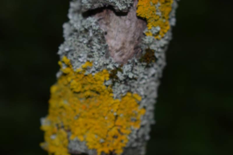 Gelber schwammiger Pilzbefall